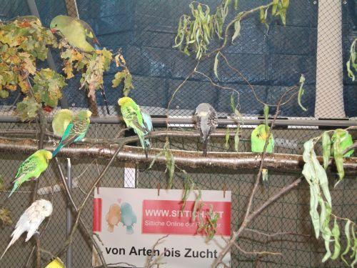 Vogelausstellung 2011